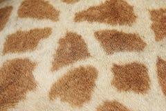 Giraffa - primo piano del reticolo del pellame di vita reale Immagini Stock Libere da Diritti