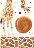 Giraffa realistica dell'acquerello Immagini Stock Libere da Diritti