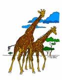 Giraffa in savana su un fondo bianco Fotografia Stock Libera da Diritti