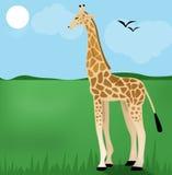 Giraffa su erba verde Fotografia Stock