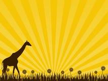 Giraffa sui precedenti gialli Fotografia Stock