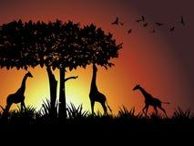 Giraffe, árvore e pássaro mostrados em silhueta de encontro a uma gole Foto de Stock