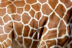 giraffe άνευ ραφής σύσταση δερμάτων προτύπων Στοκ φωτογραφία με δικαίωμα ελεύθερης χρήσης