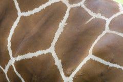 giraffe ανασκόπησης δέρμα Στοκ Εικόνες