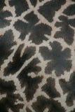 giraffe ανασκόπησης Στοκ φωτογραφίες με δικαίωμα ελεύθερης χρήσης