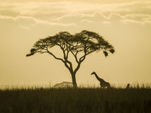 giraffe απομονωμένο Στοκ Εικόνα