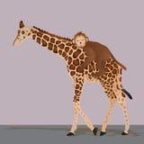 Giraffe γλυκός ύπνος πιθήκων Στοκ Φωτογραφία