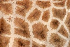 giraffe δέρμα Στοκ Εικόνες