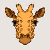Giraffe επικεφαλής πρόσωπο ρεαλιστικό Στοκ φωτογραφία με δικαίωμα ελεύθερης χρήσης