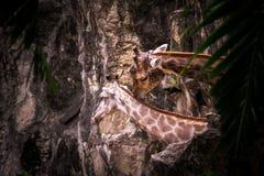 Giraffe ζεύγος Στοκ φωτογραφία με δικαίωμα ελεύθερης χρήσης