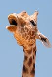 giraffe κεφάλι Στοκ φωτογραφίες με δικαίωμα ελεύθερης χρήσης