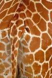 giraffe λεπτομέρειας δέρμα Στοκ φωτογραφία με δικαίωμα ελεύθερης χρήσης