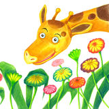 giraffe λουλουδιών Στοκ Φωτογραφίες