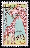 Giraffe, μια σειρά αφρικανικών ζώων στο ζωολογικό κήπο Dvur Kralove, circa 1976 Στοκ Εικόνες