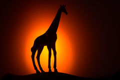 Giraffe σκιαγραφία στην ανατολή Στοκ Εικόνες