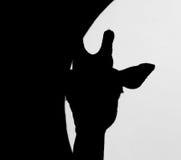 Giraffe σκιαγραφία Στοκ Φωτογραφίες
