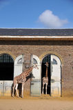 giraffe σπίτι Στοκ Εικόνες