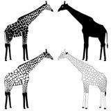 Giraffe συλλογή σκιαγραφιών Στοκ Εικόνες