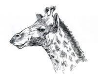 Giraffe το μαύρο λευκό σχεδίων εκτελείται από το μελάνι Στοκ εικόνες με δικαίωμα ελεύθερης χρήσης