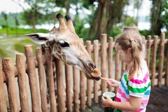 Giraffe τροφών παιδιών στο ζωολογικό κήπο Τα παιδιά στο σαφάρι σταθμεύουν Στοκ εικόνες με δικαίωμα ελεύθερης χρήσης