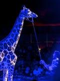 Giraffe τσίρκων μπλε Στοκ εικόνα με δικαίωμα ελεύθερης χρήσης