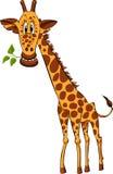 giraffe φυτό Στοκ εικόνα με δικαίωμα ελεύθερης χρήσης