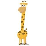 giraffe χαμόγελο Στοκ εικόνες με δικαίωμα ελεύθερης χρήσης