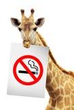 giraffe края отсутствие бумажной белизны дыма Стоковое Изображение