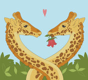 giraffe пар Стоковое Изображение