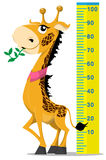 Giraffe. Funny giraffe with scale on white background Royalty Free Stock Photo