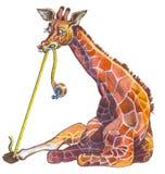 Giraffe. Most high animal in the World Stock Image