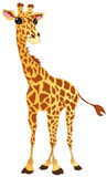 Giraffe. Vector illustration shows a happy giraffe Royalty Free Stock Photos