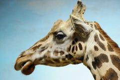Giraffe Photo libre de droits