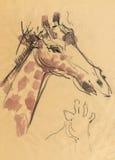 Giraffe, 2 zeichnend Stockbilder