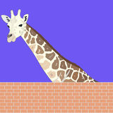Giraffe Stock Photo