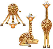 Giraffe. Funny giraffe in different positions Stock Image