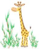 Giraffe. Fun Giraffe with green tree Stock Photography