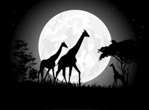 Όμορφες Giraffe οικογενειακές σκιαγραφίες με το γιγαντιαίο υπόβαθρο φεγγαριών Στοκ Φωτογραφία