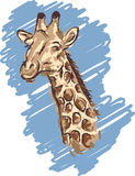 Giraffe. Head vector sketch drawing Stock Images