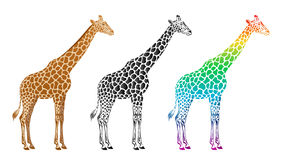 Giraffe. On a white background vector illustration