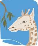 A giraffe Royalty Free Stock Images