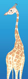 Giraffe. Illustration of a giraffe with head erect Royalty Free Stock Photography