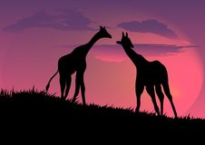 Giraffe. On beautiful night  background Stock Photos