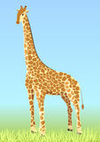 Giraffe. Illustration of an african giraffe Royalty Free Stock Photography
