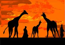 Giraffe. With people on the night Stock Photos