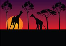 Giraffe. And tree on sunset background Royalty Free Stock Images
