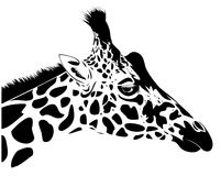 Giraffe. Vector illustration of giraffe head royalty free illustration