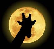 Giraffe. Vector illustration of giraffe with moon background vector illustration