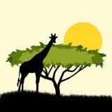 Δέντρων και giraffe ακακιών σχέδιο έννοιας σκιαγραφιών απεικόνιση του αφρικανικού θέματος σαφάρι με giraffe και ακακιών το δέντρο Στοκ εικόνα με δικαίωμα ελεύθερης χρήσης