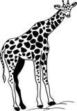giraffe ilustração royalty free
